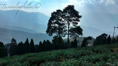 Happy valley tea estate, Darjeeling
