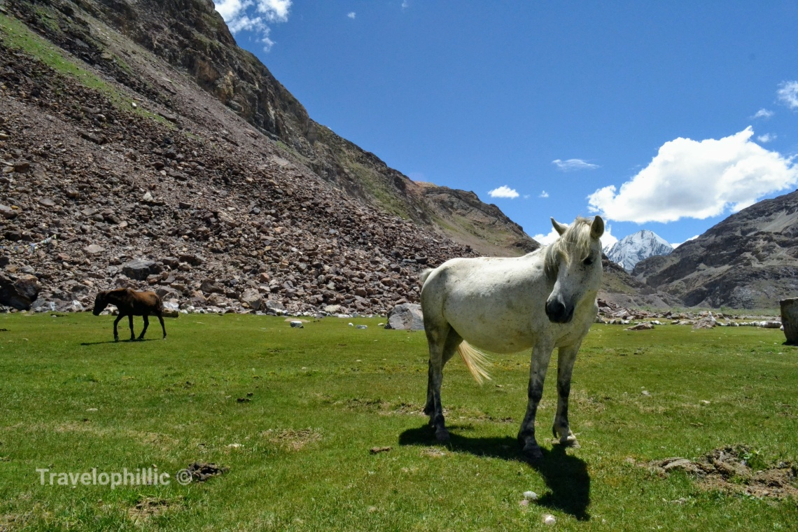 Horses grazing on the way to Kunzum La